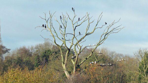 > Perching tree
