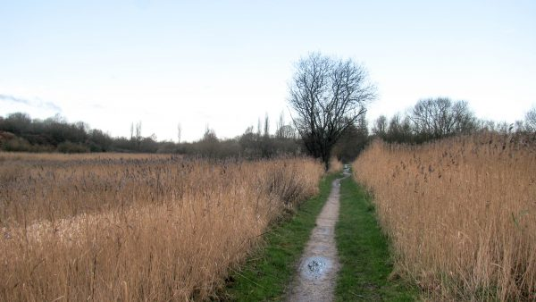 Crossing the Flood Plain