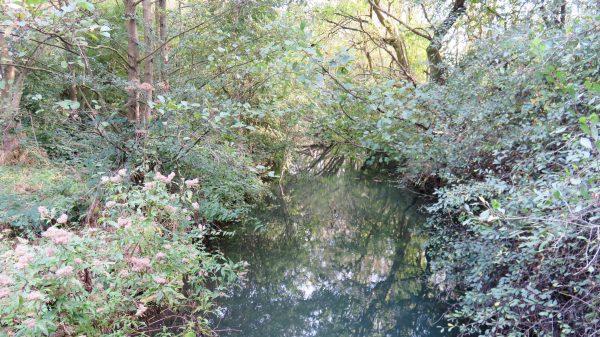 A very short section of water near Limekiln Lock 9